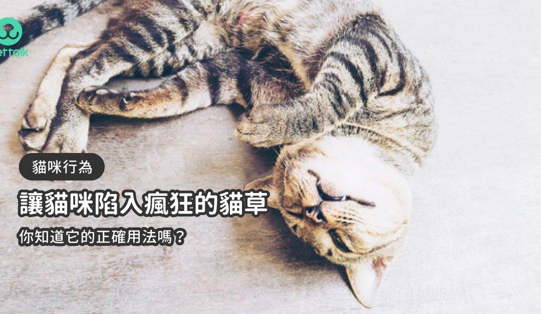 让猫咪陷入疯狂的猫草,你知道它的正确用法吗?
