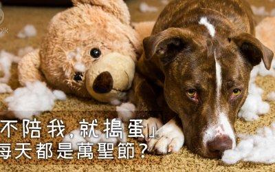 狗狗拆家的原因,怎么治狗狗拆家