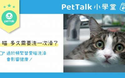 猫猫多久需要洗一次澡?