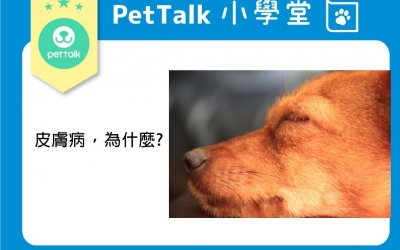 犬猫的皮肤病与皮屑成因问题预防方法