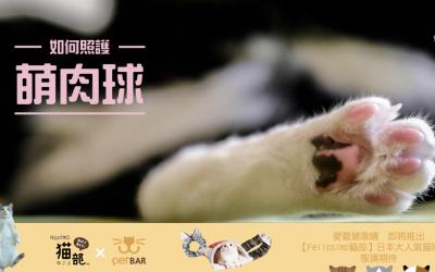猫脚肉垫作用?猫脚肉垫破裂开了该怎么办?
