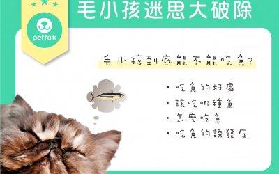 猫应该吃鱼吗?