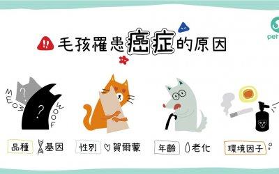 犬猫为什么也会患癌症,应该怎么预防