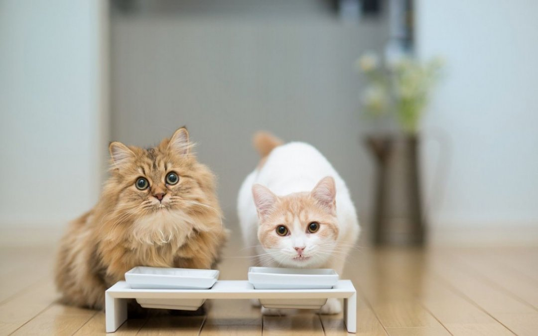 猫咪5种骨关节疾病!预防治疗总整理