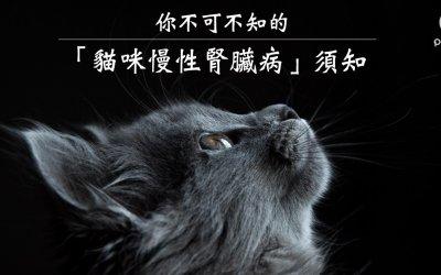 你不可不知的「猫咪慢性肾脏病」