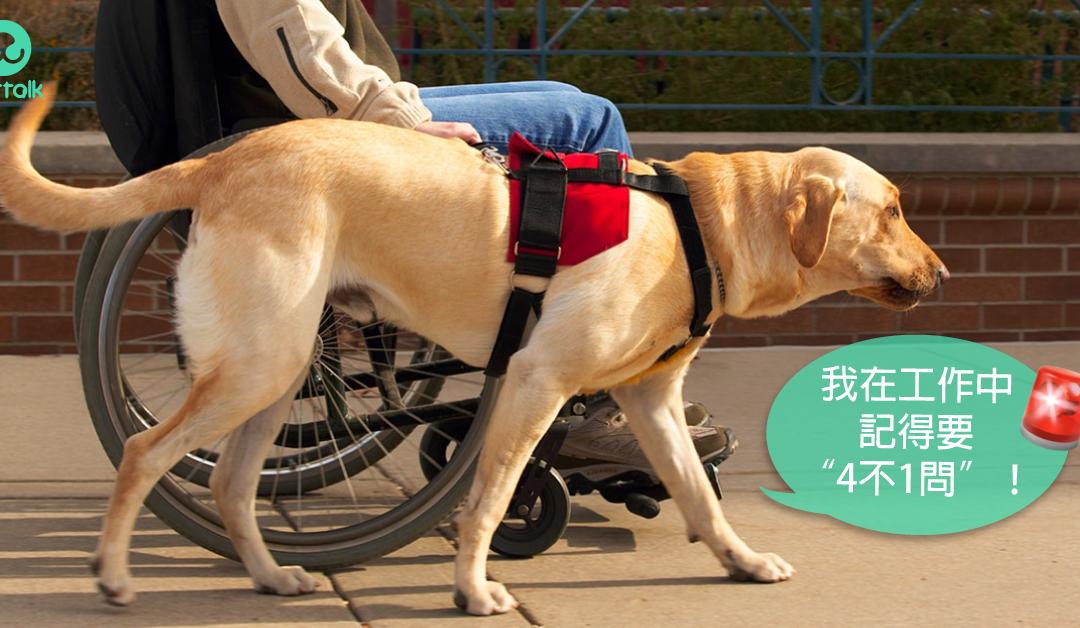 工作犬特辑:导盲犬的工作经