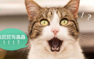 如何治疗猫绦虫?
