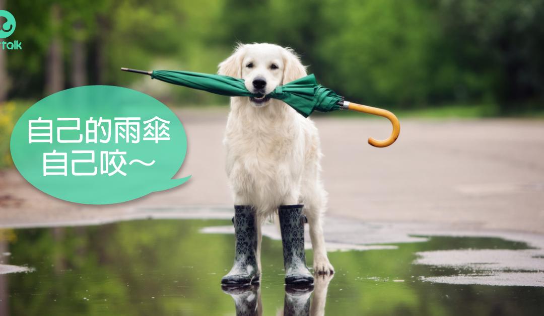 犬钩端螺旋体症状与治疗