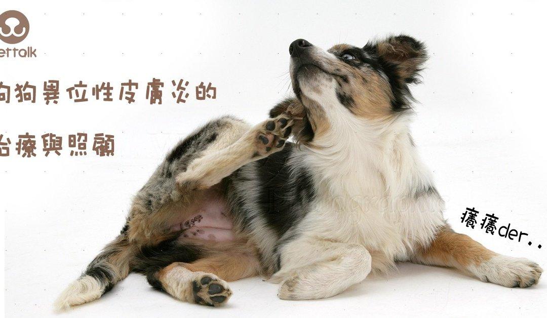 狗狗异位性皮肤炎的症状与治疗