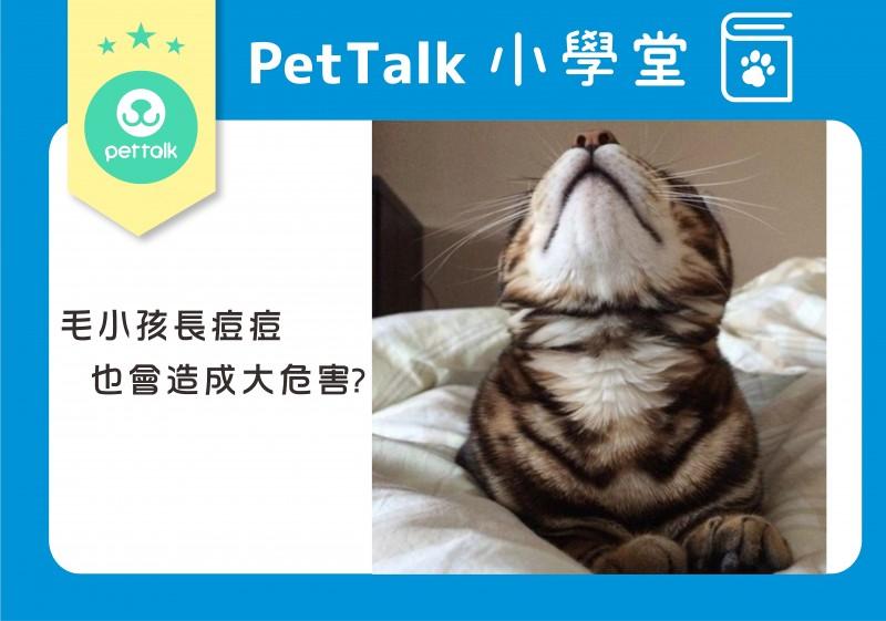 狗猫身上长痘痘该怎么办?
