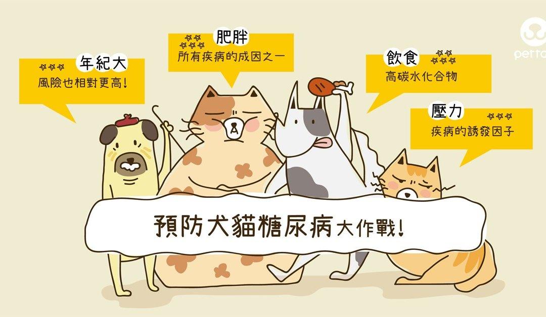 预防犬猫糖尿病大作战