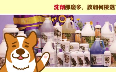 猫狗的沐浴露种类繁多,应该如何挑选使用?