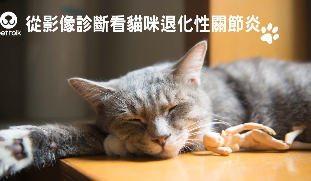 从影像诊断看猫咪退化性关节炎
