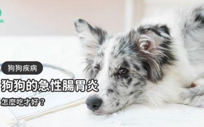 狗狗急性肠胃炎原因症状治疗方法