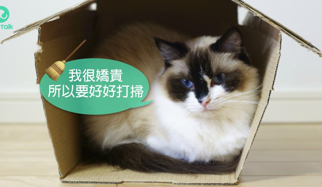 如何彻底清除猫身上的跳蚤
