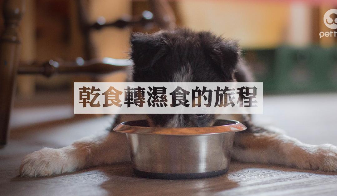 猫狗干粮转湿粮的方法