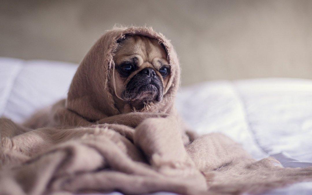 狗狗痉挛、抽筋 处理措施公开