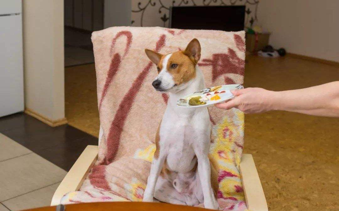 狗狗挑食不爱吃饭怎么办?