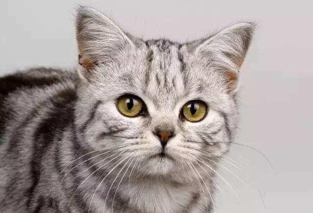 养猫需要做什么准备?需要考虑哪些因素
