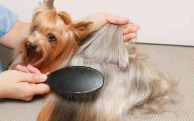 家中狗狗猫咪掉的毛怎么清理干净