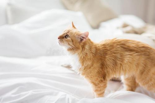 家里有猫需要注意什么?以下11点很重要