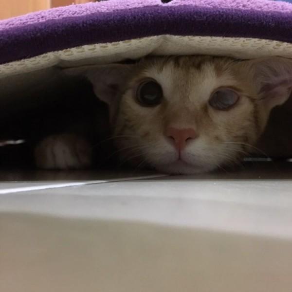猫咪眼睛疾病